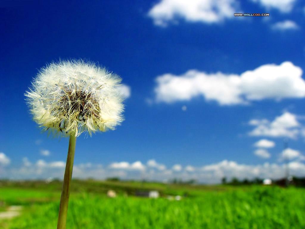 http://2.bp.blogspot.com/_NellBgY9Zqs/S_QHqGj3DPI/AAAAAAAAIUg/NiTAmACwNYM/s1600/dandelion-flower.jpg