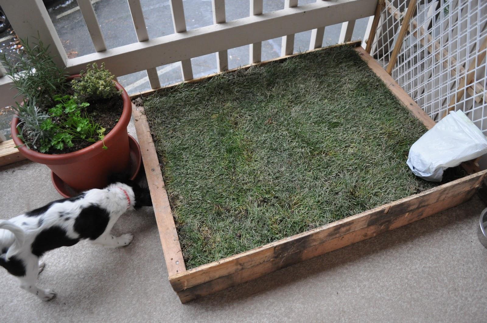 The Adventures of Kym & Dustin DIY Patio Dog Grass