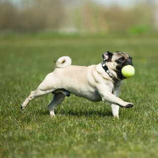 PawLux.com:. a day in the life of an eco-dog: Fetch 101: How to ...