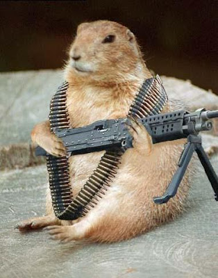 SQUIRREL with gun scraps SQUIRREL with gun graphics SQUIRREL with gun images SQUIRREL with gun pics SQUIRREL with gun photos SQUIRREL with gun greetings SQUIRREL with gun ecards SQUIRREL with gun wishes SQUIRREL with gun animations