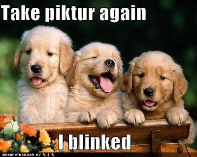 very cute puppies pictures. Cute Puppies Images Send free