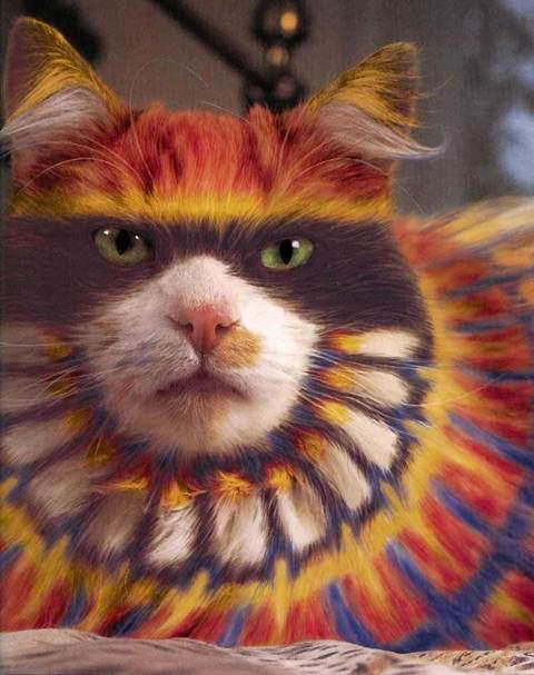 wallpaper kucing comel. wallpaper kucing comel.