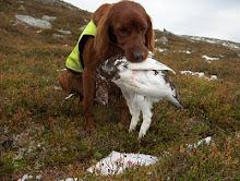 04036/02 Kleivskogens I-Shira - død 2009