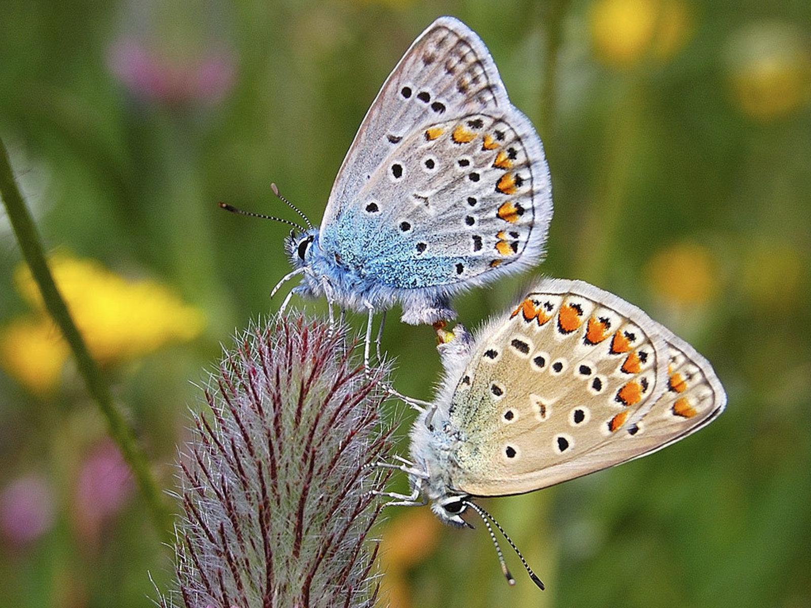 http://2.bp.blogspot.com/_Nke1Q0QgLLo/TQDDaYB8OpI/AAAAAAAABtQ/eibBrKwoB5w/s1600/butterfly+psupero.jpg+%252830%2529.jpg