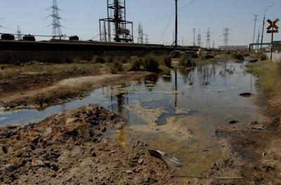 Des plantes contre la pollution des sols à l'arsenic