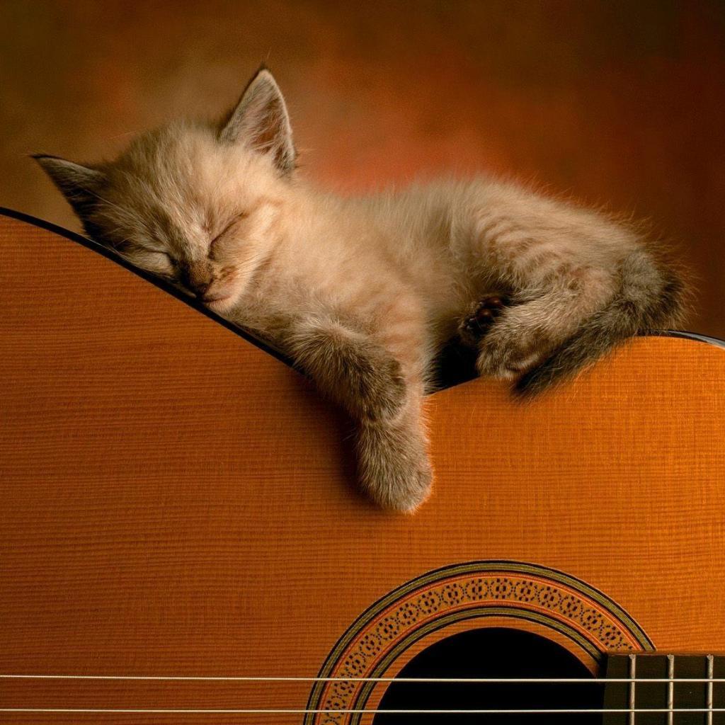 http://2.bp.blogspot.com/_Nlqk7Defxm8/TP4D01ojbuI/AAAAAAAAADw/PFkLIgrzbzc/s1600/iPad-Wallpaper-Guitar-Kitten.jpg