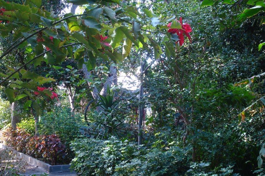 Rosa en gran canaria agaete huerto de las flores for Plantas beneficiosas para el huerto