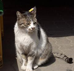 RFID Kim Chi Cat