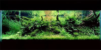 Aquarium Art 10