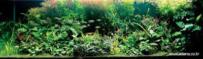 Aquarium Art 3