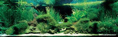 Aquarium Art 2