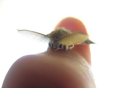 Tiny Animals On Fingers 6