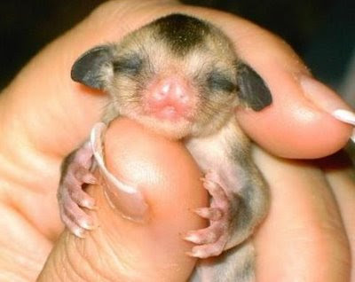 Tiny Animals On Fingers 8