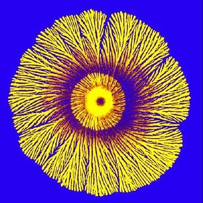 Petri Art (11)