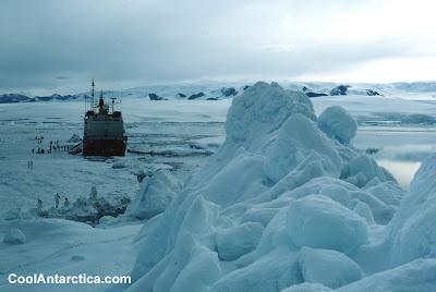Cool Antarctica (5)  5
