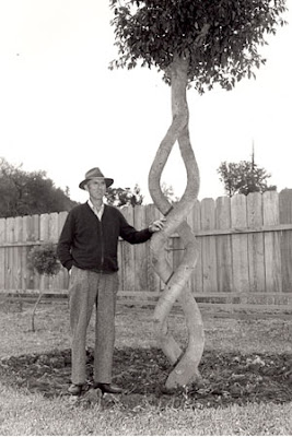 The Tree Circus (2) 1