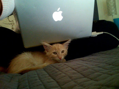 cat near mac notebook