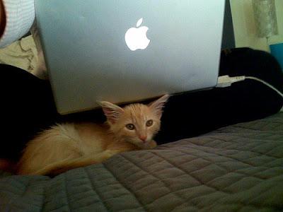 cat near mac notebook