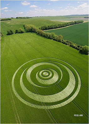 Beautiful art in the fields (10) 8