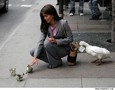 Ducks & money