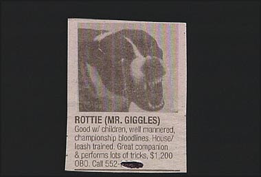 Interesting And Funny Newspaper Clippings (16) 12