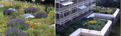 Cool and Creative Green Roofs (21)  5