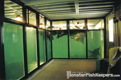 tank aquarium (6) 2