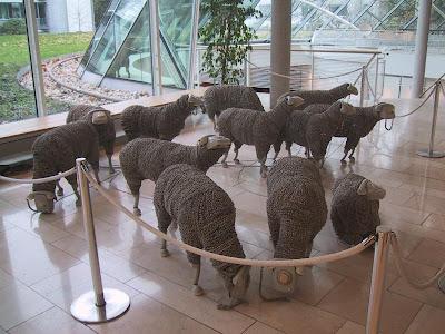 Phone Lambs (4) 3