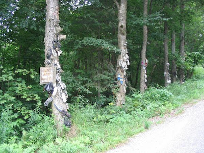Shoe Trees (36) 21