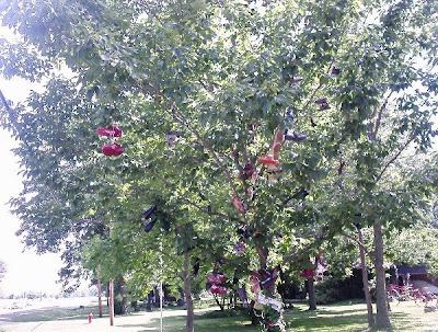 Shoe Trees (36) 8