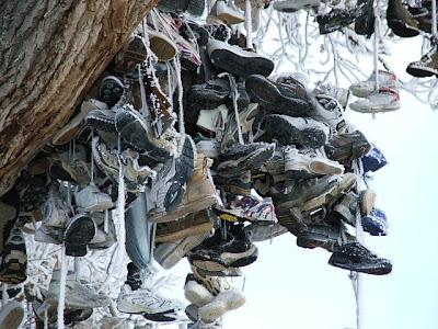 Shoe Trees (36) 6
