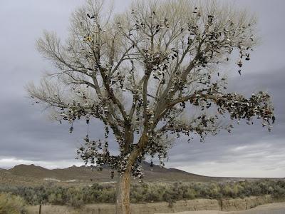 Shoe Trees (36) 7