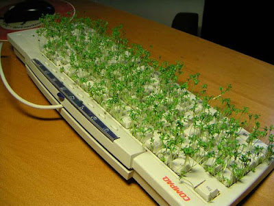 Greenery on keyboard