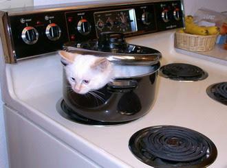 Cats+(29).jpg