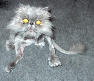 Cats+(20).jpg