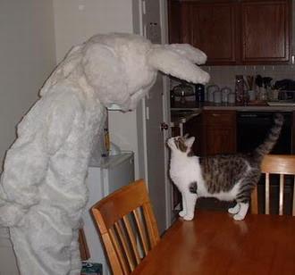 Cats+(21).jpg