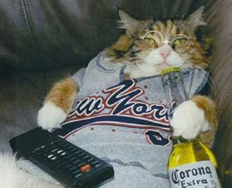 Cats+(10).jpg
