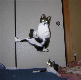 Cats+(5).jpg