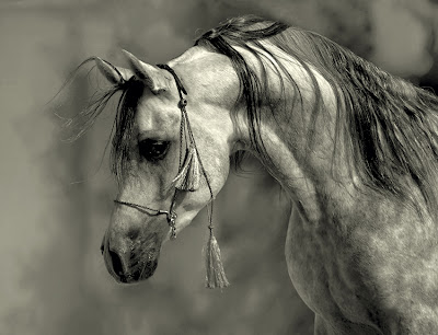 Horse+(12).jpg