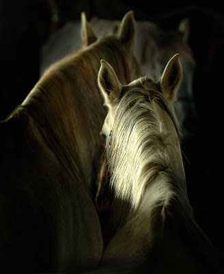 Horse+(7).jpg