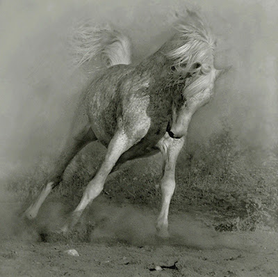 Horse+(3).jpg