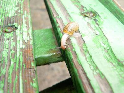 Snail+2.jpg