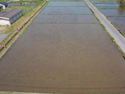 Beautiful Rice Field Art 3 