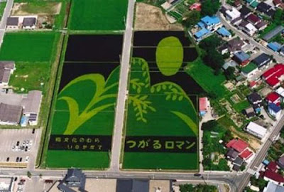 Beautiful Rice Field Art  14