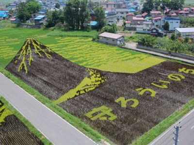 Beautiful Rice Field Art  12