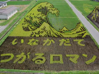 Beautiful Rice Field Art  7