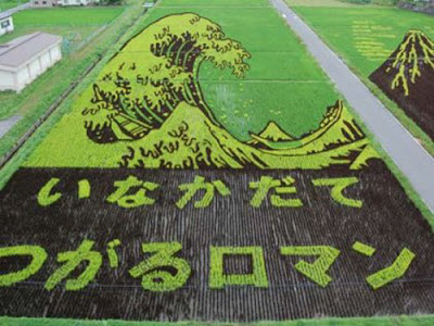 Beautiful Rice Field Art  8
