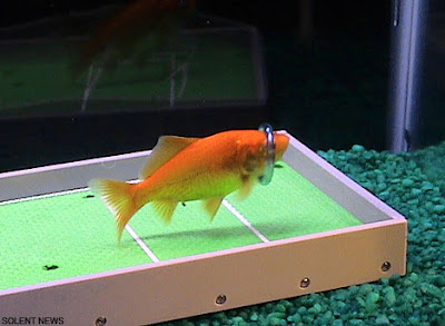 Intelligent Fish (7) 4