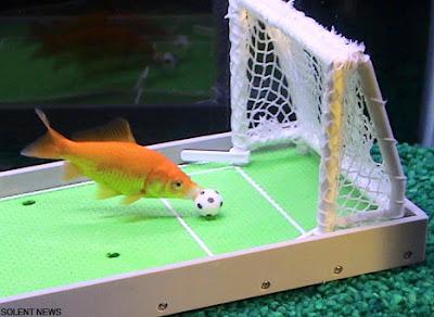Intelligent Fish (7) 2