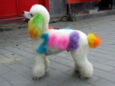 Colorful Dogs (16) 9